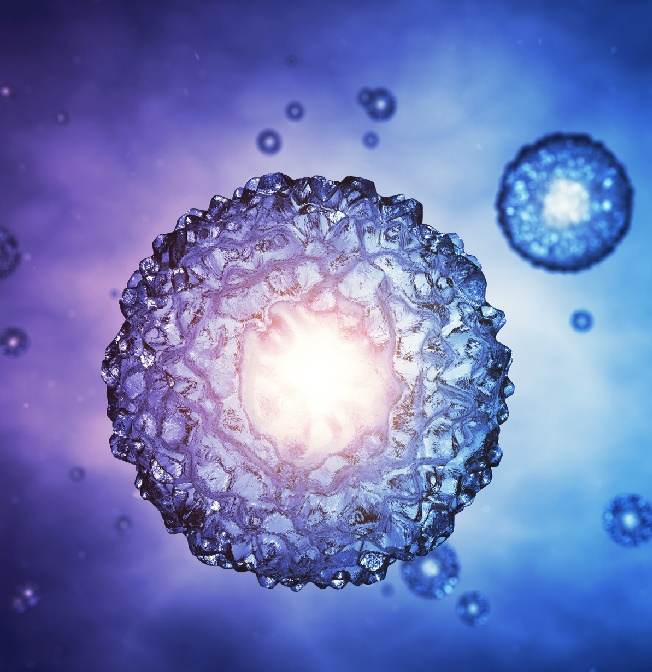 Blastocyst-Culture-and-Transfer